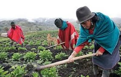 Pacto Social por la Vida y por el Ecuador: Agricultura Familiar Campesina entrega sus propuestas